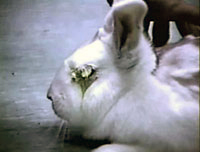 Top Five Shocking Animal Experimentation Facts