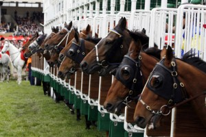 horseracing 300x200 Urge Congress to Protect Horses in Racing Industry