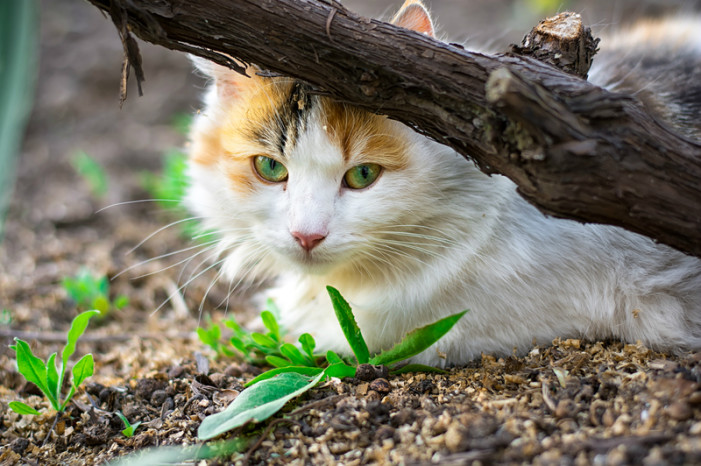 Simpson Low-Cost Clinic will be hosting 2 free Feral Cat spay/neuter days