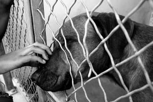 Dog at shelter 300x200 Dog at shelter.jpg