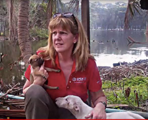 Terri Thailand video SPCA International Says Emergency Animal Relief Effort is Making a  Difference in Hardest Hit Areas in Thailand Disaster