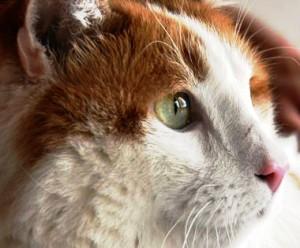 cat381 300x248 cat381.jpg