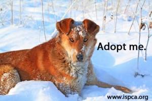 adoptame 300x200 adoptame
