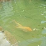 lorifish1b 150x150 A fish story