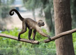 ds3 7343 300x218 Monkey