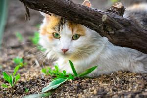 000642 0002 001517 300x200 street cat