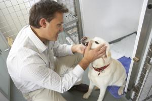 mon146015 300x200 Vet Checking Dog In Pen