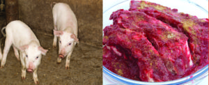 meatpork 300x122 Teen dies after brain infection from eating undercooked pork
