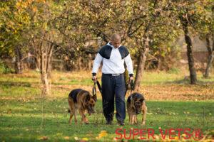 SUPER VETSrmandogs 300x200 SUPER VETS®