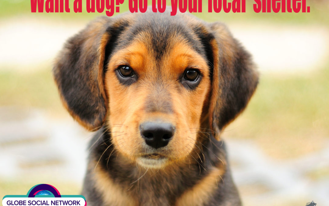Want a dog? Go to your local shelter.